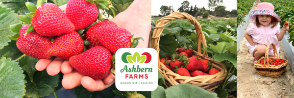Collage of strawberry images from Ashbern Farms