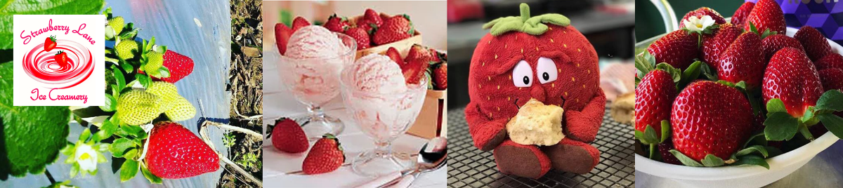 McMartins Strawberry Farm at Bli Bli - A collage of strawberry images