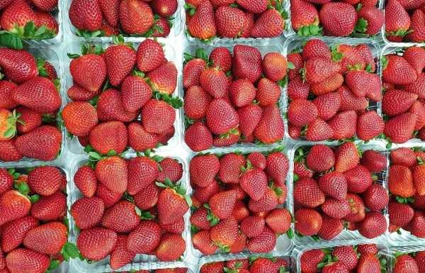 Erbachers strawberries