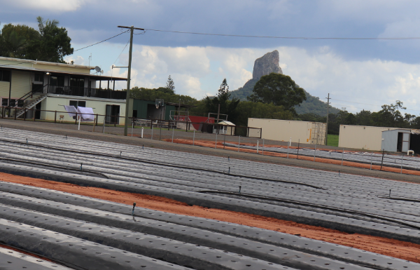 GG group rows with glasshouse mountains