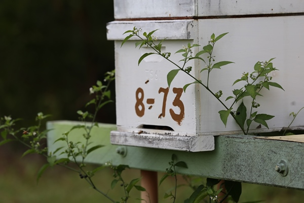 Luvaberry farm bee hives