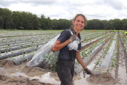 Oz Strawberry, French worker