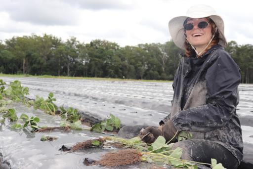 Oz Strawberry, Planter, Aussie worker