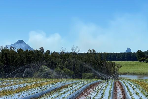 piñata farm strawberry rows