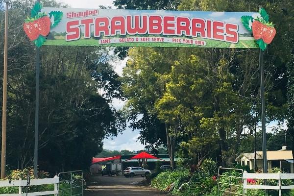 Shaylee Strawberries Farm Sign