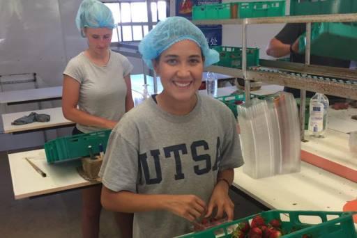 Sonnshein strawberry pack house worker