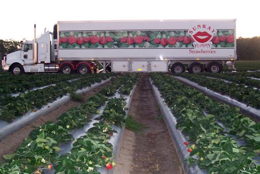 Sunray Strawberries, Strawberry truck