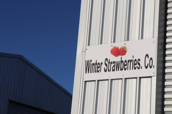 Winter Strawberries Farm sign