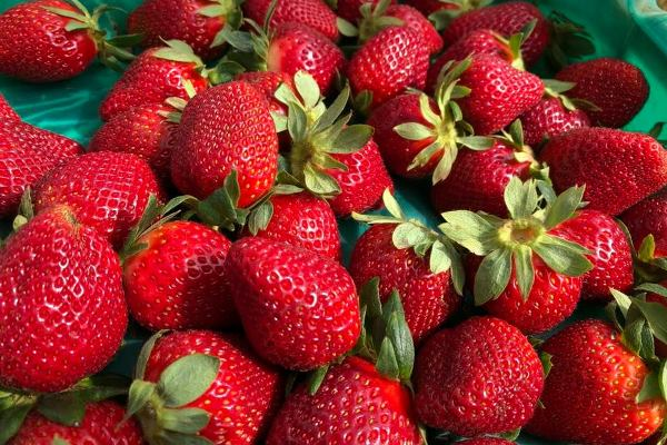 Wellington Point strawberries