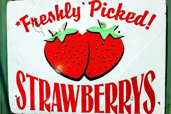 Wellington Point Farm strawberry
