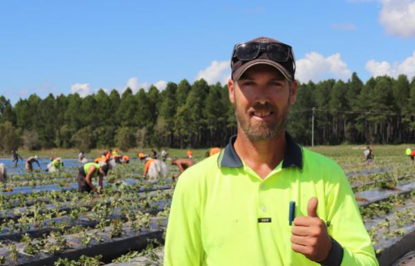 Queensland berries Australian worker