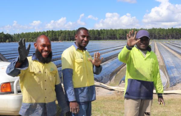 Queensland Berries Solomon workers